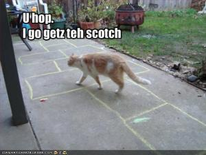 Funny-pictures-your-cat-does-not-play-hopscotch